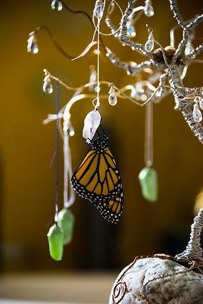 Emerged Monarch