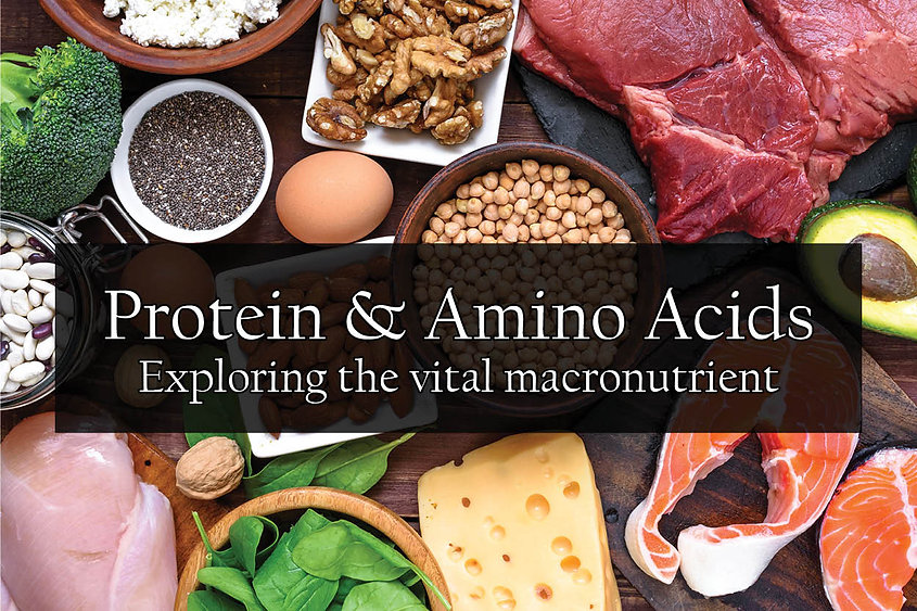 """A variety of high protein foods including meats, cheeses, vegetables, beans, nuts, and seeds. The words """"Protein & Amino Acids, Exploring the vital macronutrient"""" are included."""