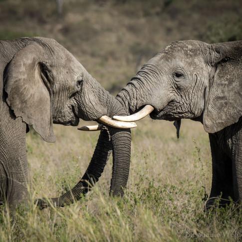 ElephantKiss.jpg