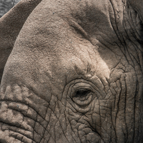 Elephant Pano.jpg