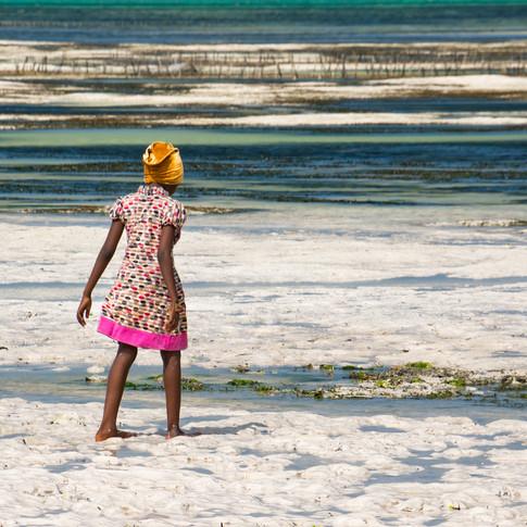 Seaweed Harvester.jpg