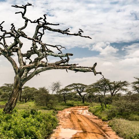 Serengeti Road II.jpg