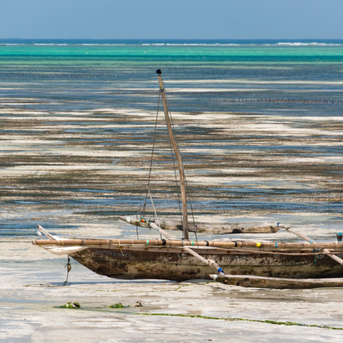 Zanzibar Shore.jpg