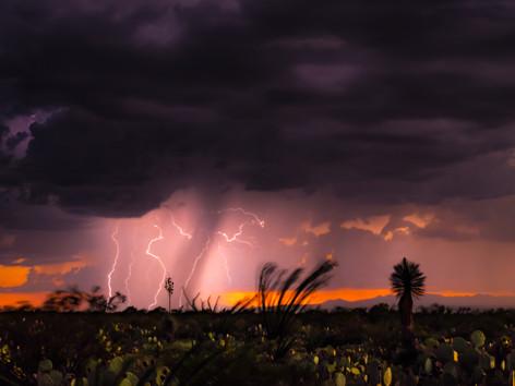 Sonora Desert Monsoon