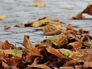 Isn't autumn grand