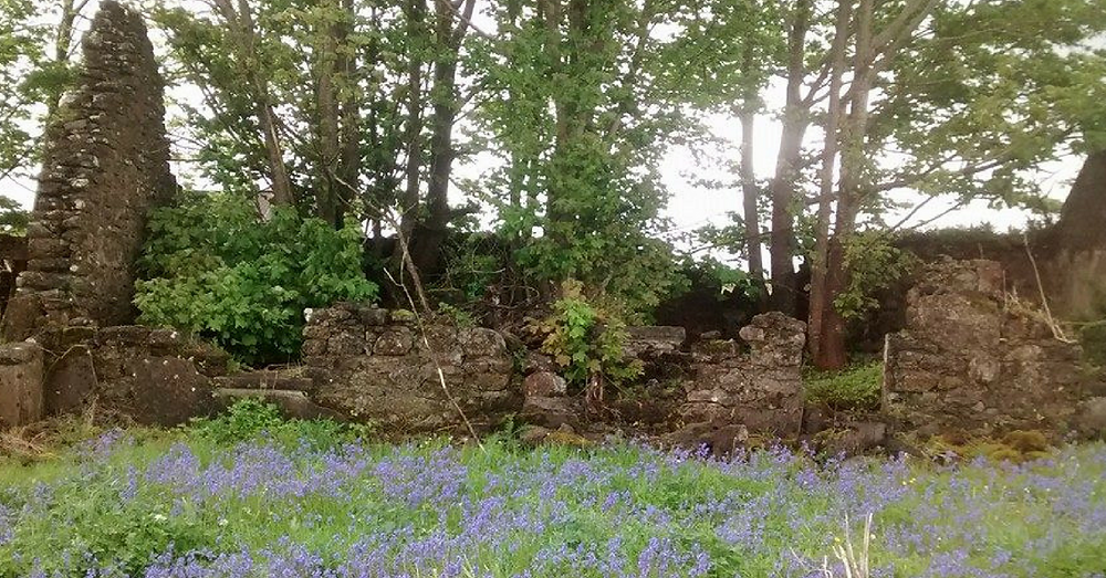Abandoned Irish Cottage Co. Mayo