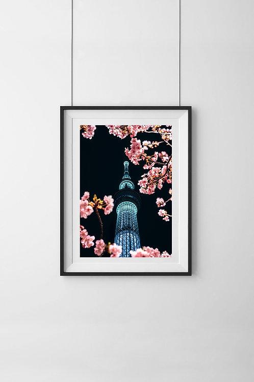 Skytree Blossom