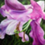lusious lily jpg.jpg