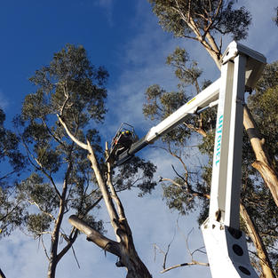 All types of tree removals