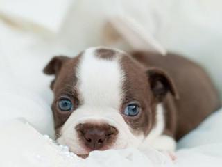 Yavru köpek buldunuz, nasıl bakacağınızı bilmiyorsunuz, o zaman bu yazıyı lütfen okuyun!