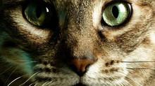 Da Vinci haklı, gerçekten de kediler bir başyapıt  :)