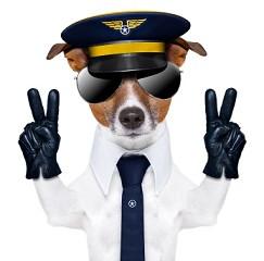 Evcil hayvan yurtdışına çıkış prosedürleri