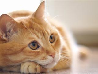 Kedinizin pire sorununu nasıl halledeceksiniz? *