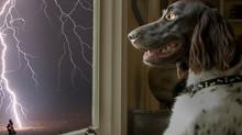 Gökgürültüsünden korkan köpeğinize nasıl yardımcı olabilirsiniz?