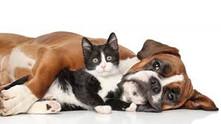 Kedi ve Köpeklerde Zehirlenme/Belirtileri ve Tedavisi
