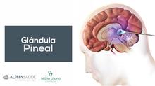 Glândula Pineal: Problemas nos relacionamentos podem ser físicos e não emocionais