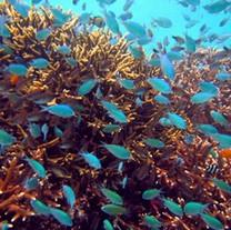 Bali life undewater - Banc de poisson