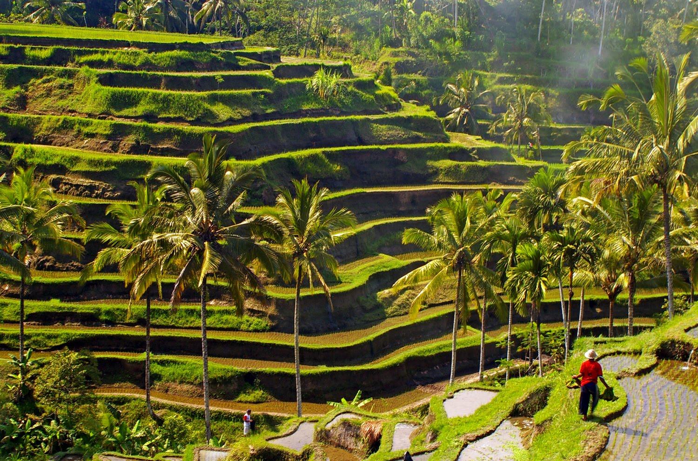 Tegalalang ricefield, Rizières de Bali