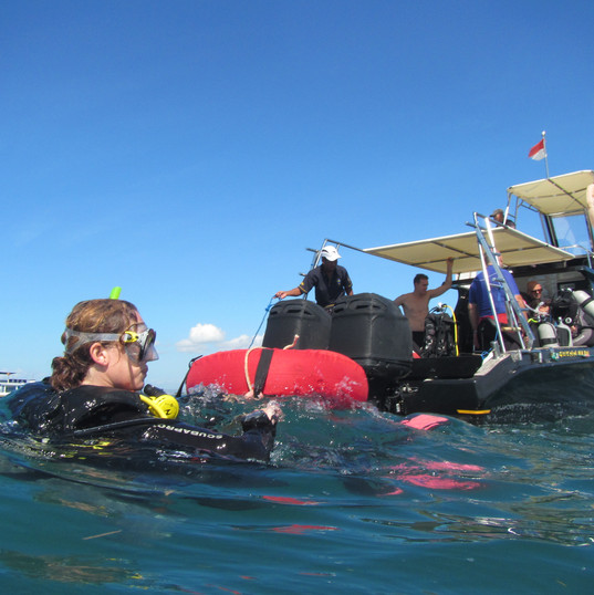 Diving again and again in the balinese sea