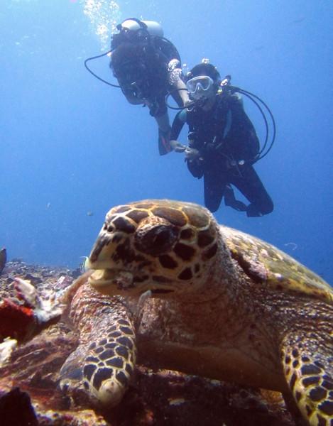 Turtle Amed Bali - Tortue de mer à Amed