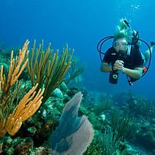 diving coral menjangan bali