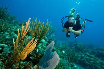 Protéger les coraux : les écogestes du plongeur responsable