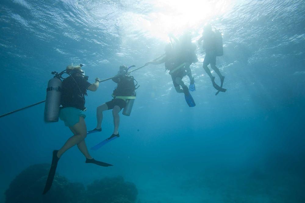 Plongeurs en descente