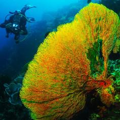 Wonderful and colorful coral in Menjangan