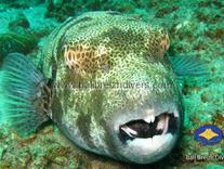 Pufferfish Jetty