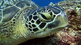 Turtle Bali Tortue de mer