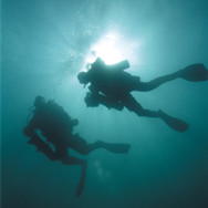 Diving almost everyday...
