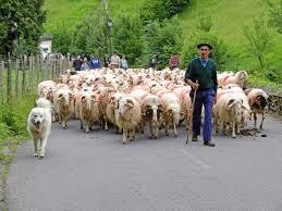 Our Shepherd(s)