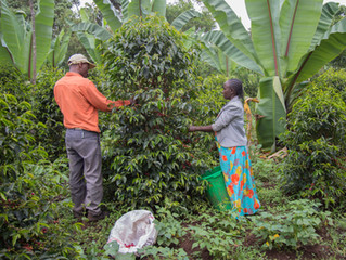 Empowering farmers for speciality coffee