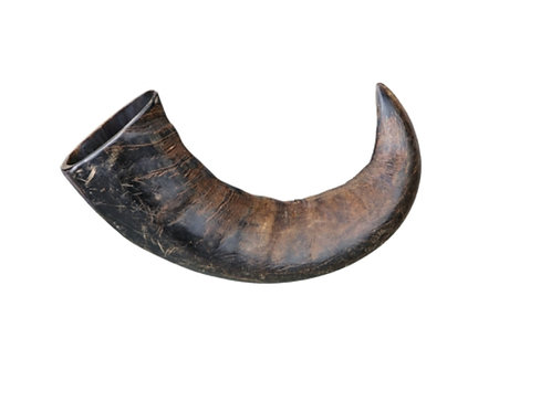 Corne de buffle (Moyen)