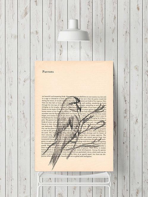 'Parrots'