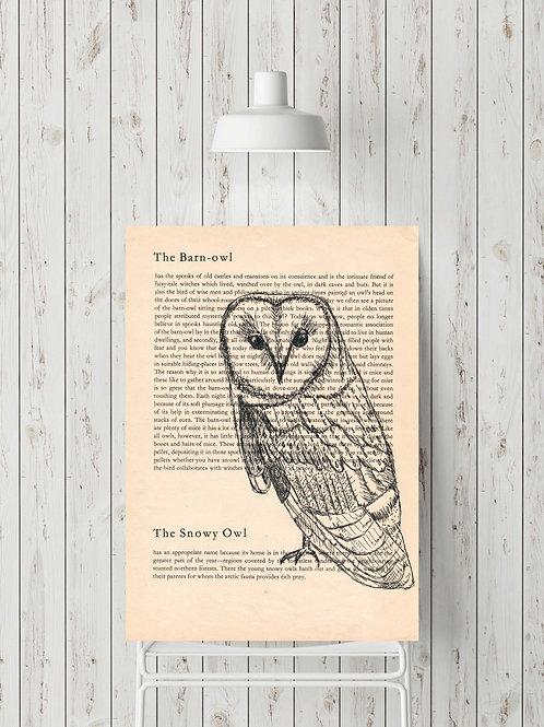 'The Barn-owl'