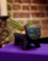 black cat from janet.jpg