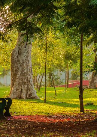 Bharathi Park
