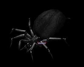 ToA Arachnis.PNG