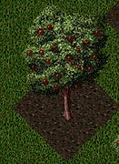 Pomona Apple Tree.png