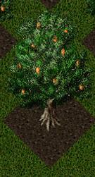 Pomona Almond Tree.png