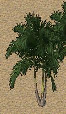 Pomona Coconut Palm Tree.png