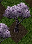 Pomona Plum Tree.png