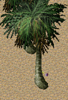 Pomona Date Palm Tree.png