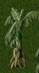 Pomona Banana Tree.png