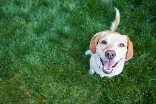 Dog playing outside smiles.jpg