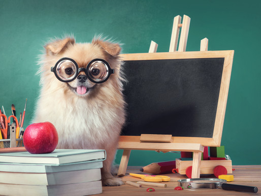 Teaching English to Your Puppy/ Step 1 in Dog Training