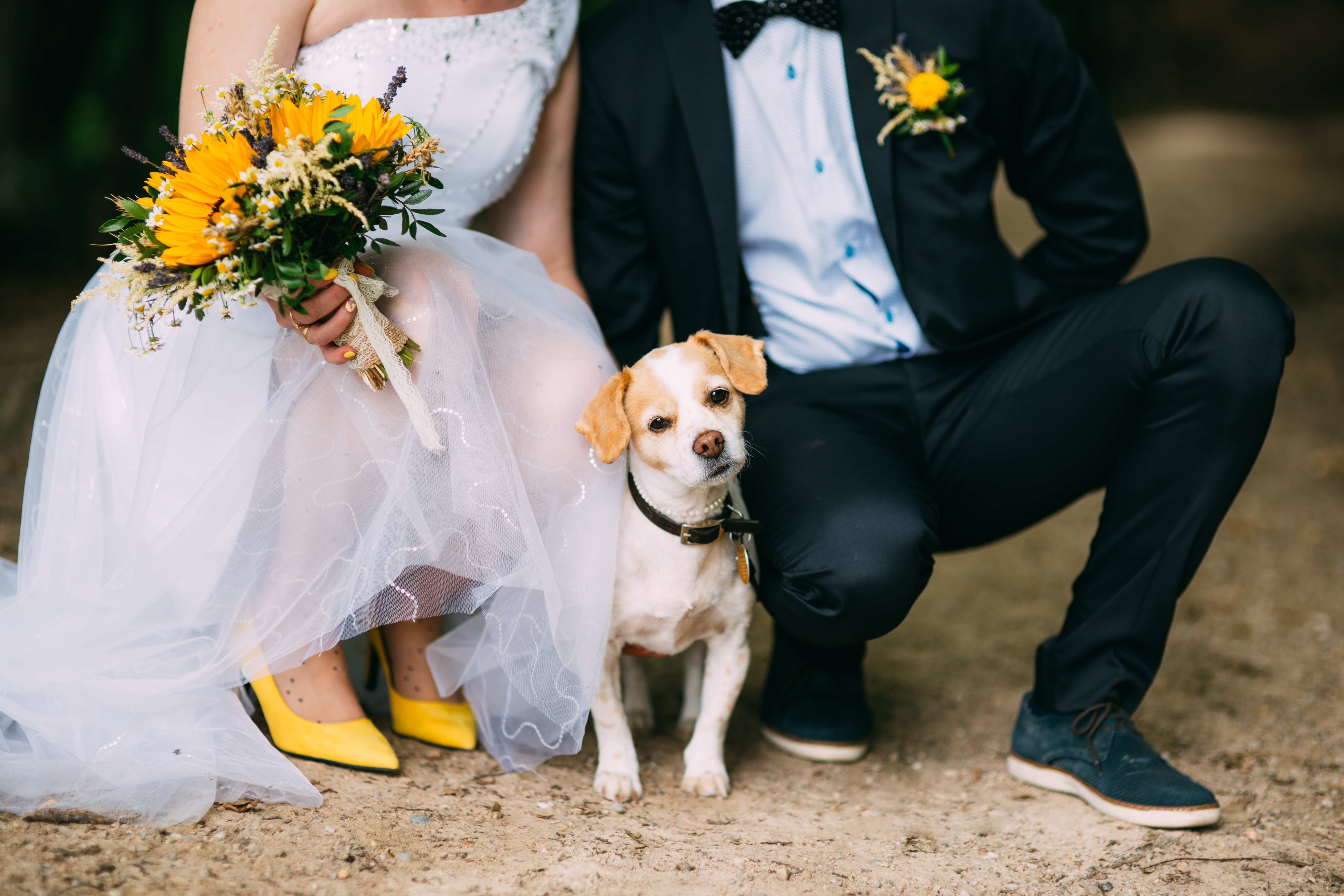Cute little dog attending at a wedding