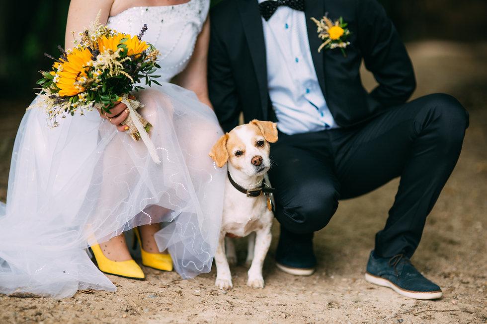 Cute little dog attending at a wedding.j