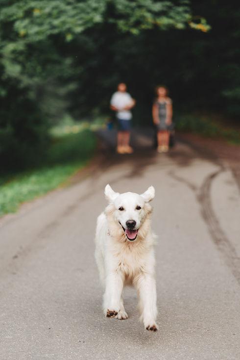 Big white dog running along the road aga